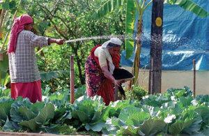 organic-farming1