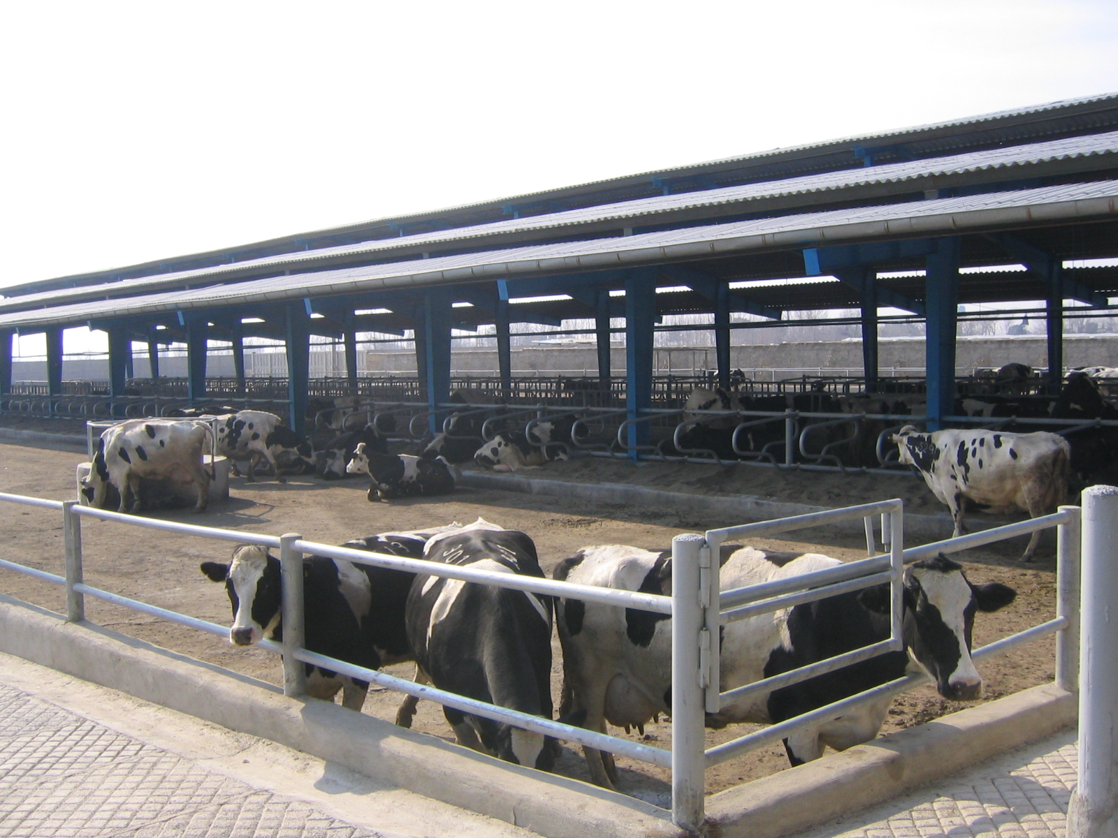 Model Dairy Farm In Kanpur