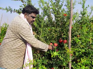 Experience of a farmer – There are only 20% successful farmers. The remaining 80% are failures only