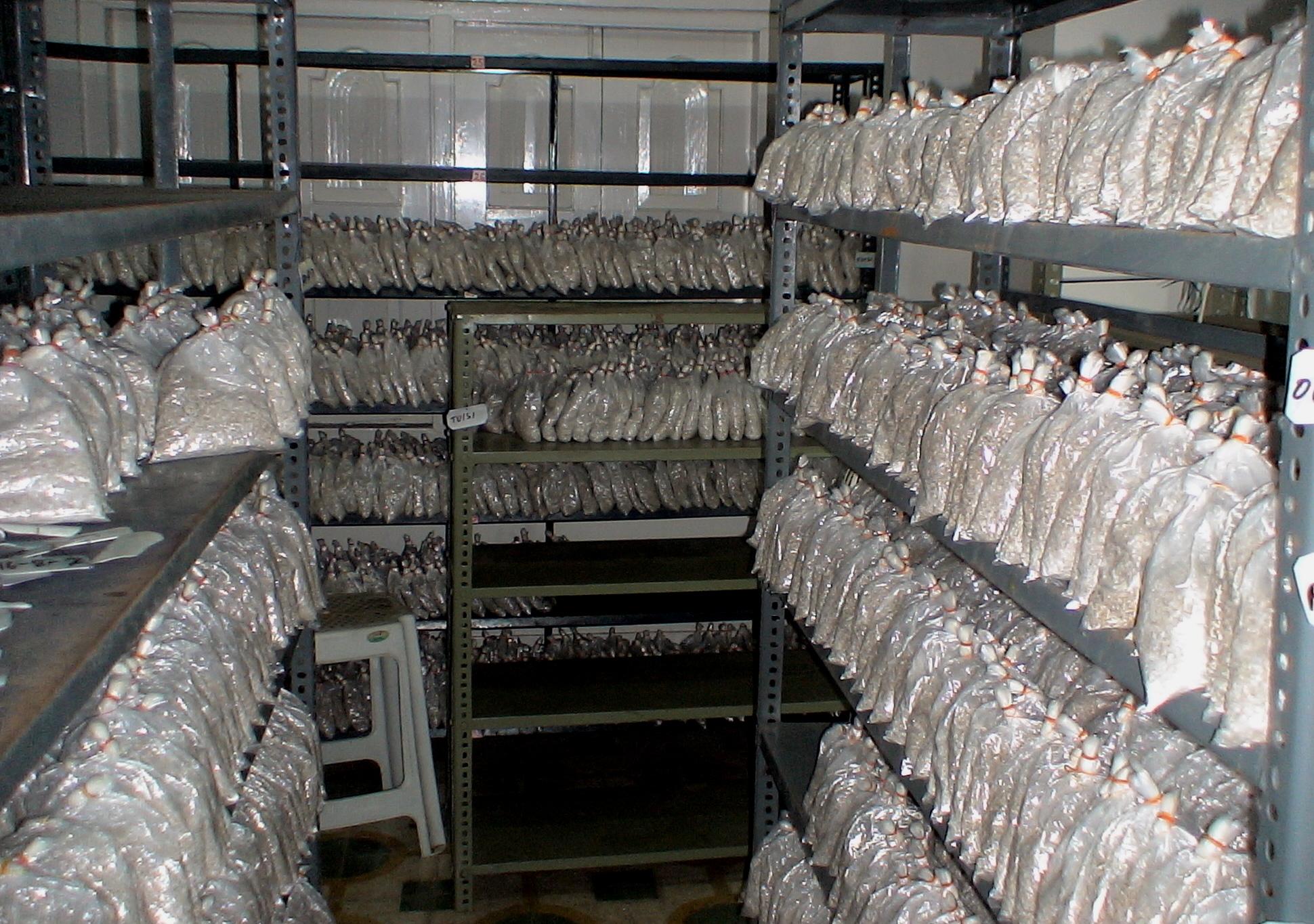 Mushroom Biotech – supplies mushroom spawns developed in the liquid