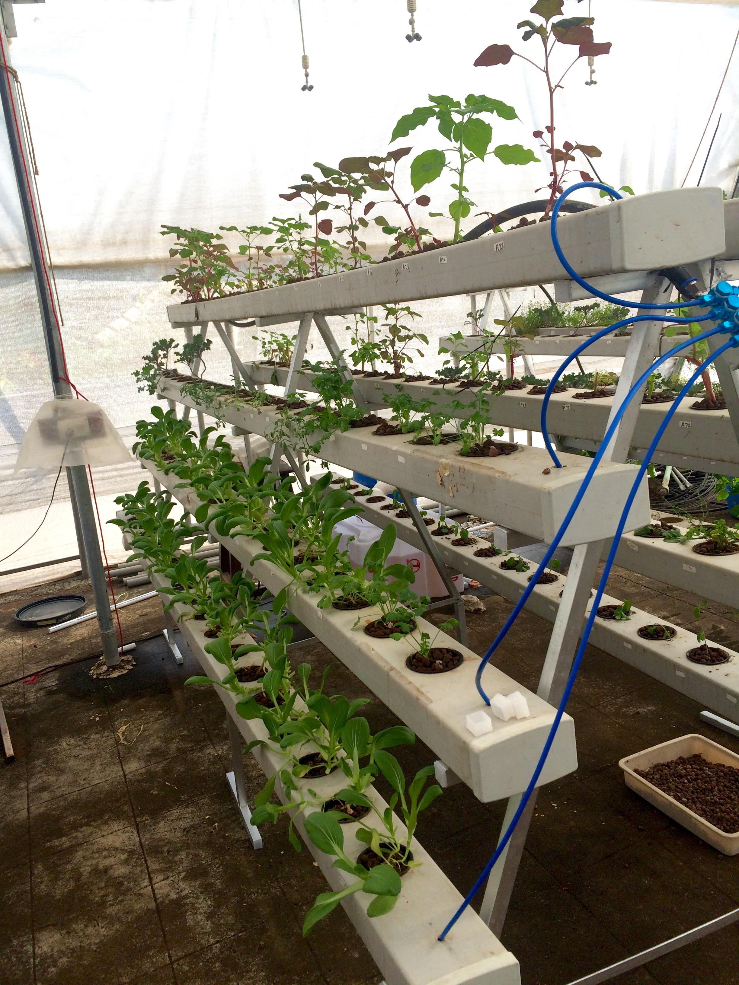 Craft promotes aquaponics and hydroponics for urban for Hydroponics aquaponics