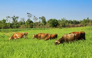 Astra Dairy Farm 01