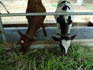 Murugan Dairy Farm