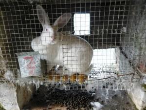 Manjushri Rabbit and Goat Farm