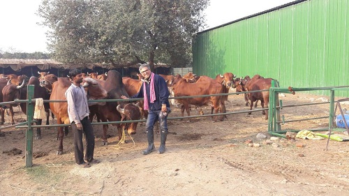 Sanjay Bhalla – passion driven dairy farmer rears gir cows exclusively