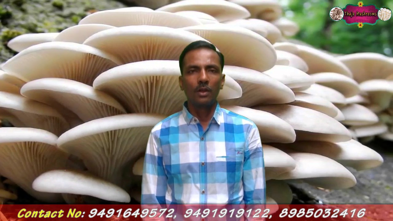 Thaja Mushrooms