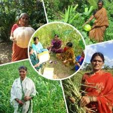Green Foundation – conserves and exchanges local and indigenous varieties of seeds