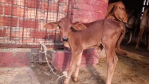 Libra Dairy Farm (6)