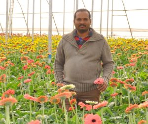 Sama Yella Reddy – grows gerbera in poly house to bring fame to his village