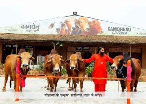 Divya Jyoti Jagrati Sansthan – uses blend of traditional and modern scientific methodologies for improving Indian desi cow breeds