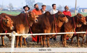 divya jyothi- pic 4