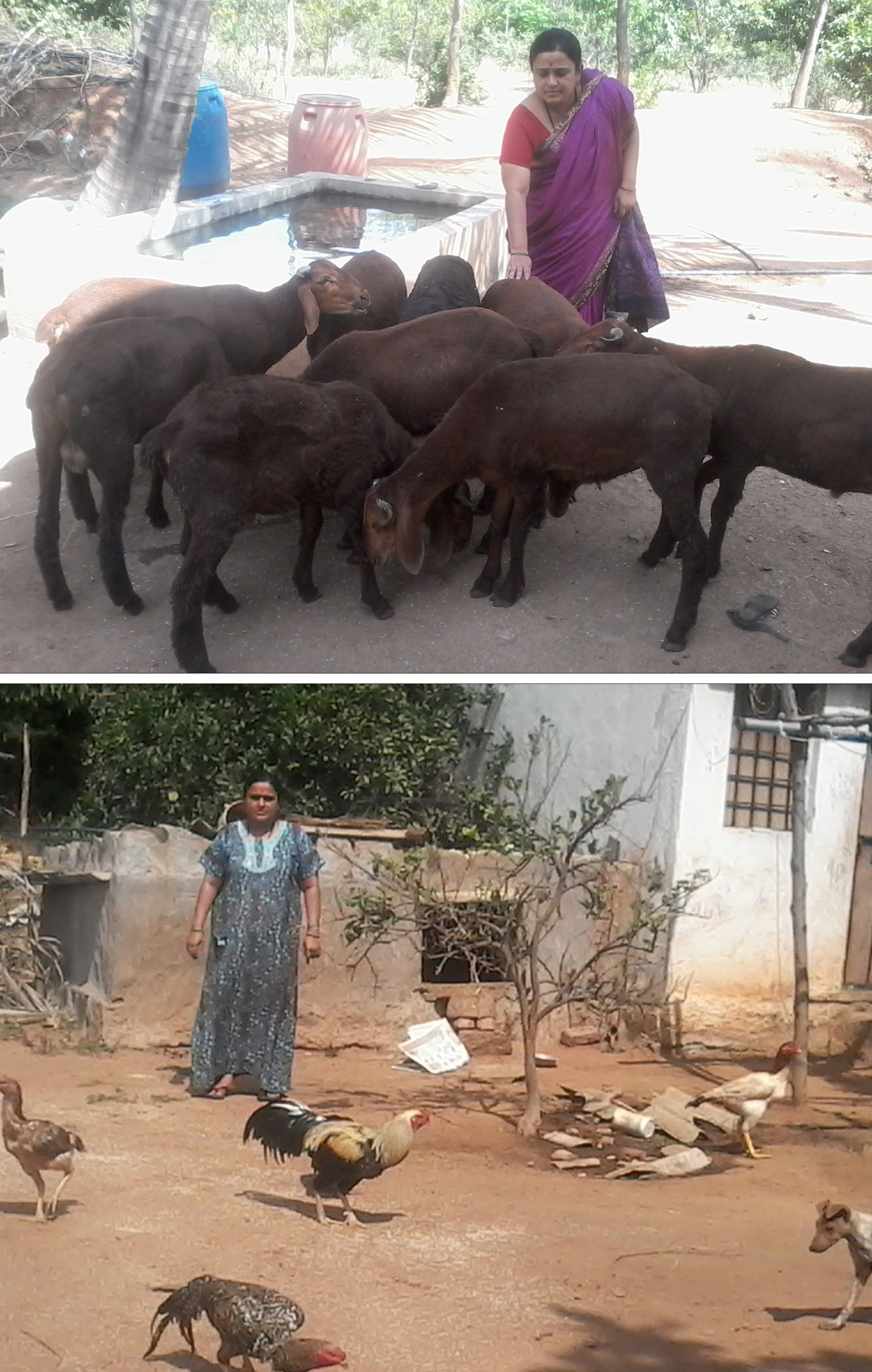 Kavitha Umashankar Mishra – creates forest environment with