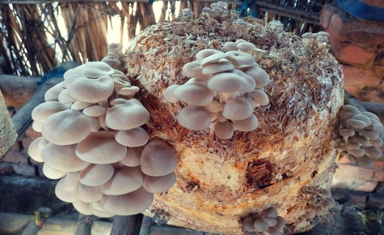 Mushroom cultivation business in tamilnadu