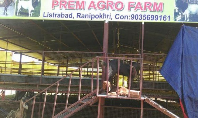 Prem Agro Farm – rearing and breeding four goat breeds in