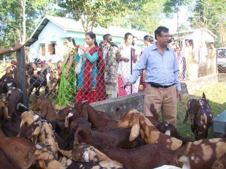 Sheep and Goat Breeding Farm, Silonijan, Assam