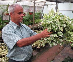 Phanas Plantation – exotic garden plants