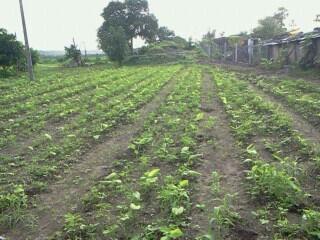 Mr. Ghanshyam Chopade – government official turned farmer