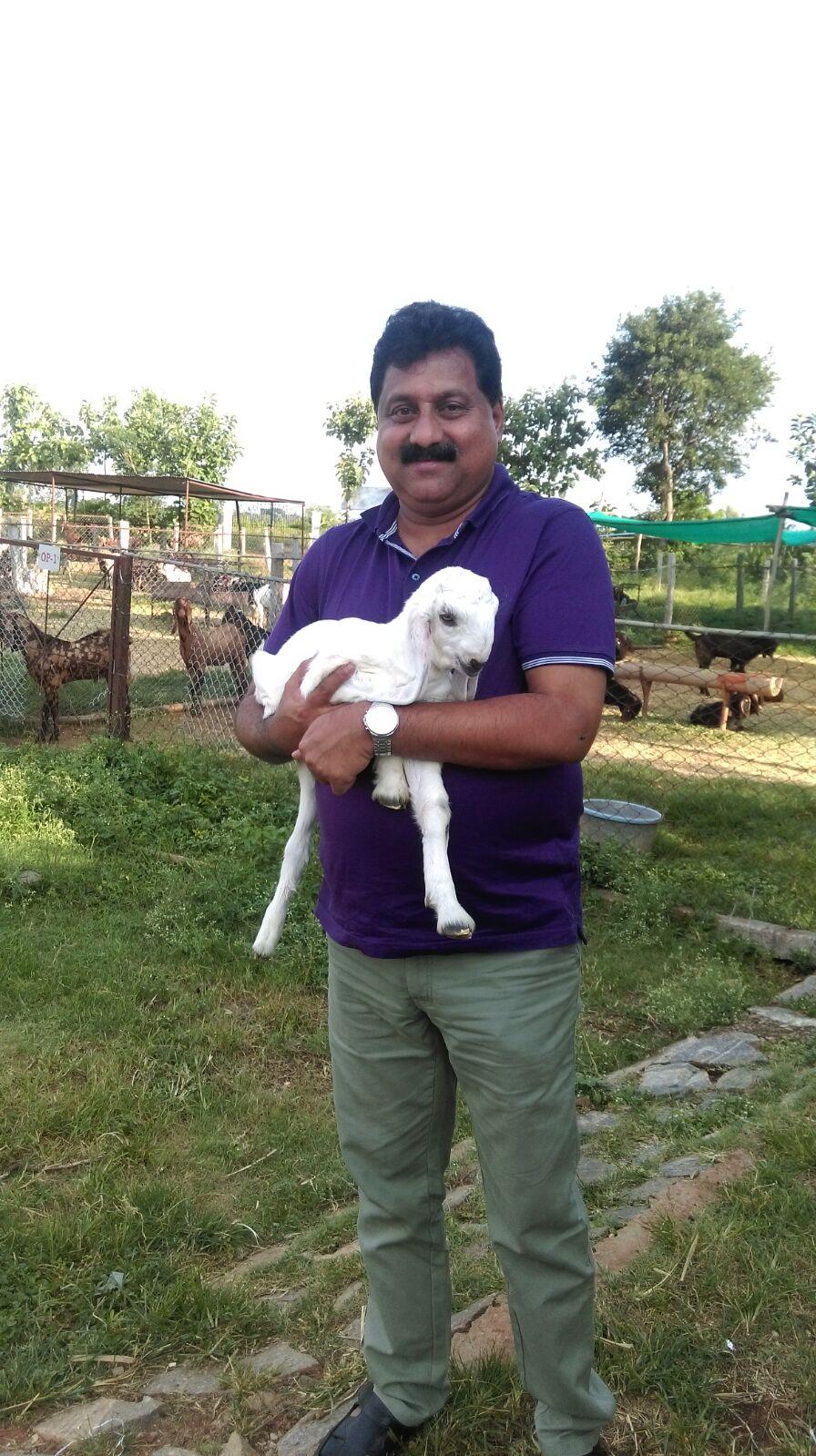 Amma Bhagawan Goat Farm, outskirts of Mysuru, Karnataka.