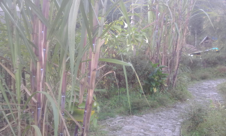 Daragaon Village Retreat – boosts farming with tourism