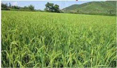 V. Venkateshwarlu – Supplies bio fertilizers and fungicides