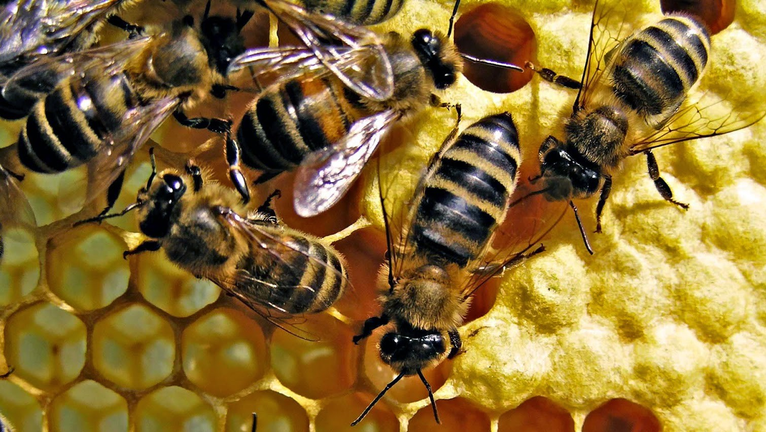 Madhukeshwar Janaka Hegde –  shares more avenues of income generation from bee rearing other than honey