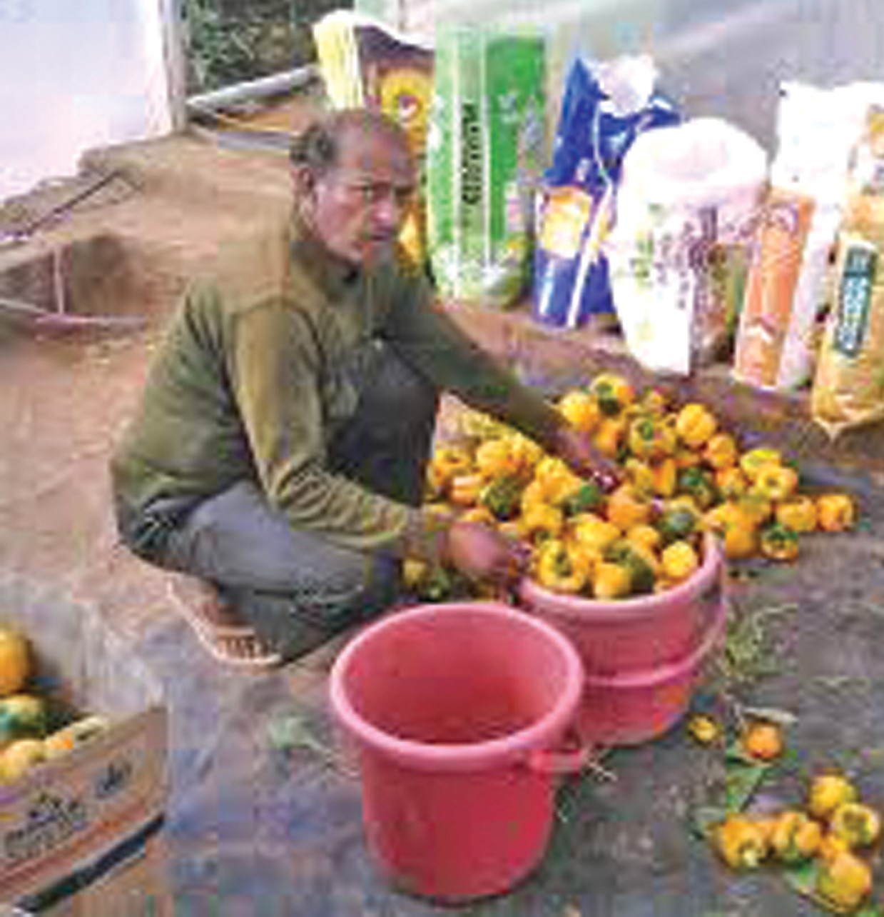 Malagonda S Biradar – Ex-army soldier reaps good profits in poly house farming