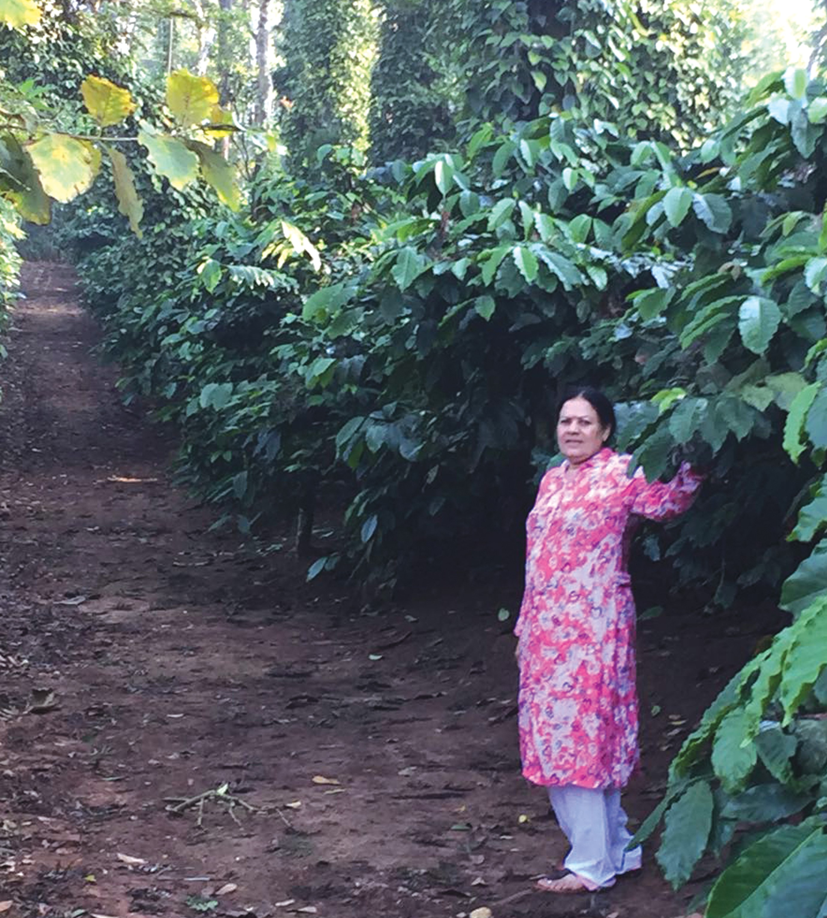 Prema Estate – boosts coffee and pepper production with basin management techniques