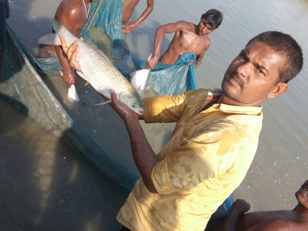 Goriakothi Matsya Lock Farm – Specializes in pangasius fish seed