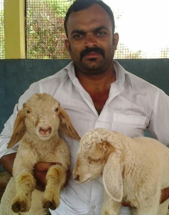 Papanna Gowda Bandur Sheep Farm – engaged in rearing and breeding exclusively Bandur sheep breed
