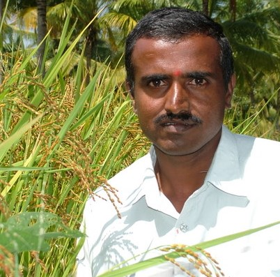 Boregowda S – Conservationist of desi paddy seeds