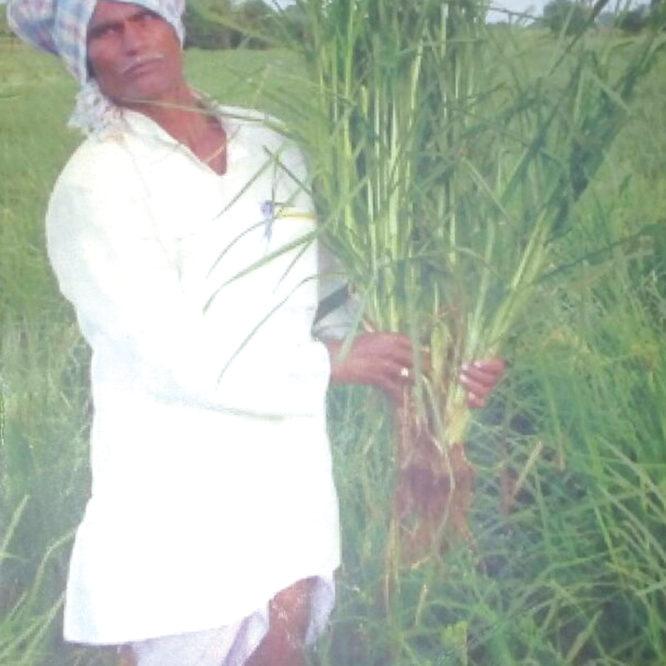 Mukappa Shivappa Poojar – finger millet production