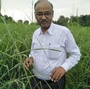 Aromatic grass cultivation -Ashok Kumar Jonwal on reasons why projects fail